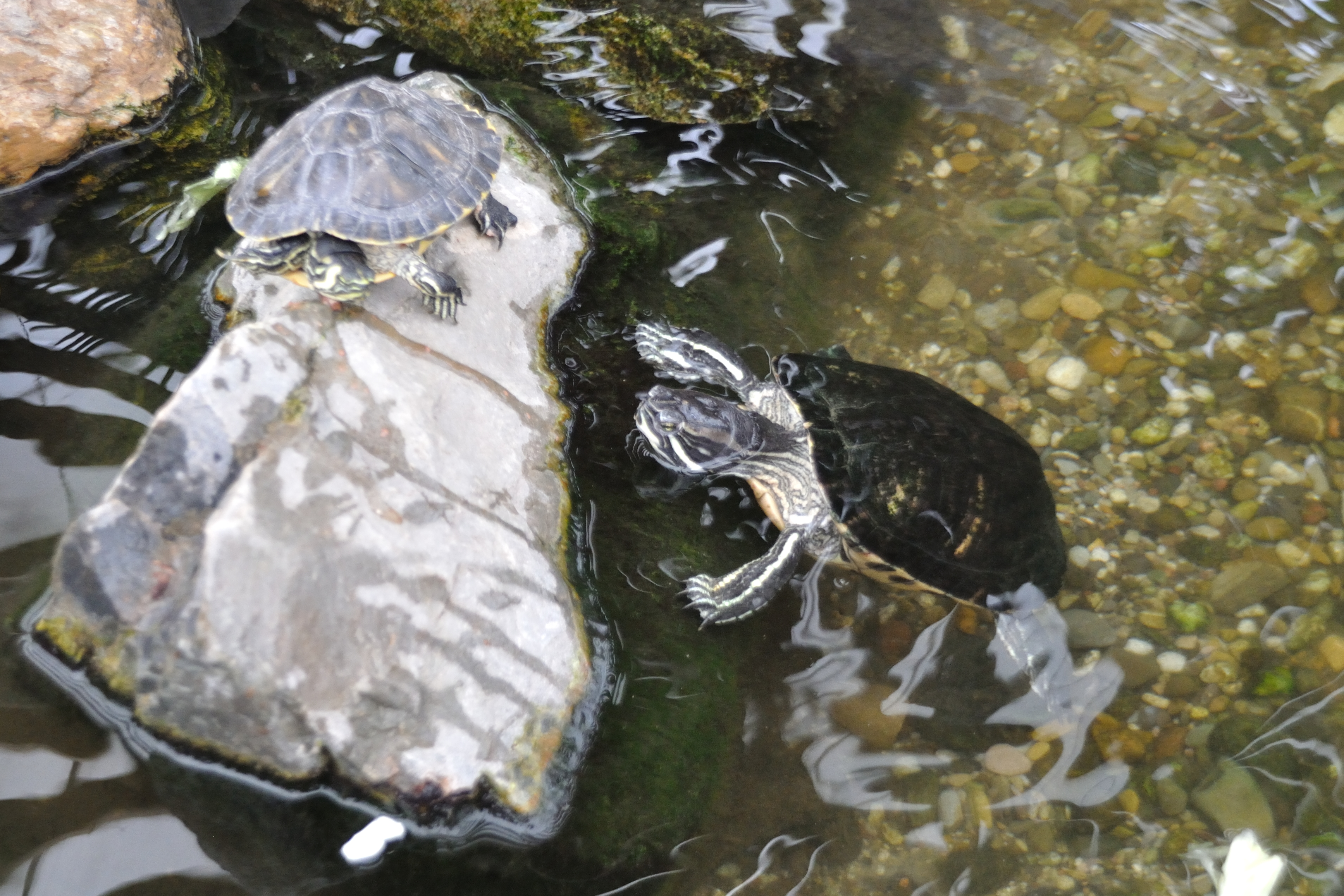 Turtle Care Sheets - All Turtles