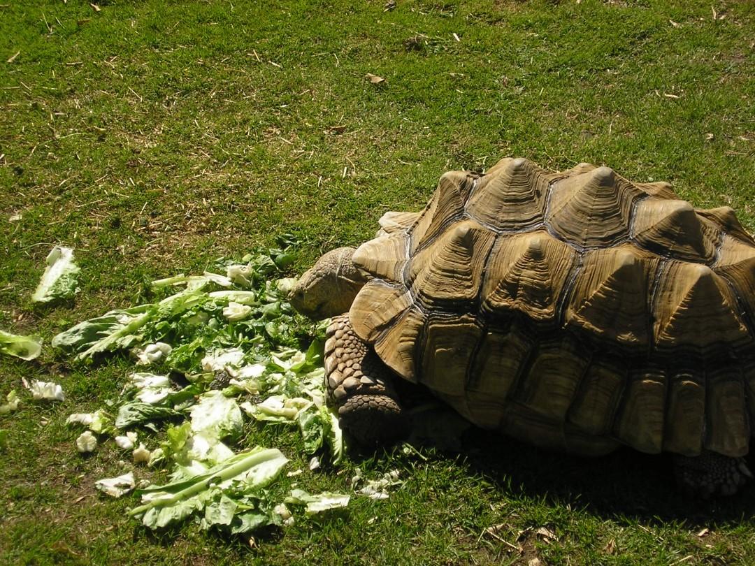 Land Turtle Feeding - All Turtles