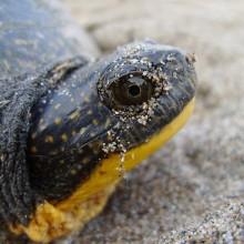 FAQ Turtle