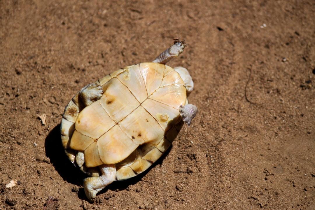 Pet Turtle Care