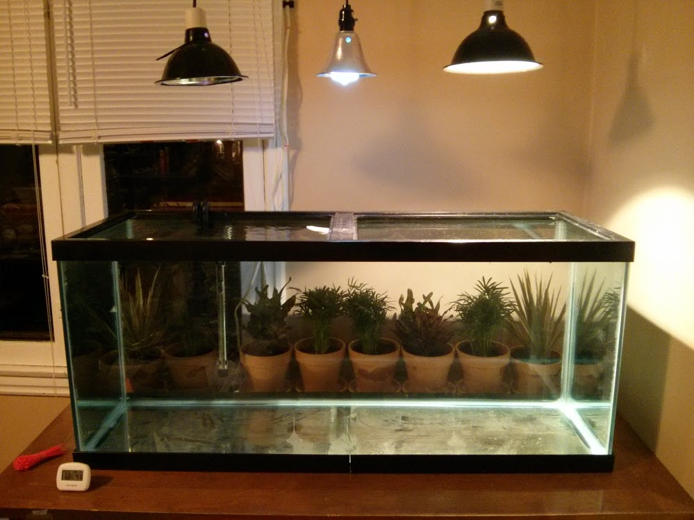 Indoor Water Turtle Setup All Turtles