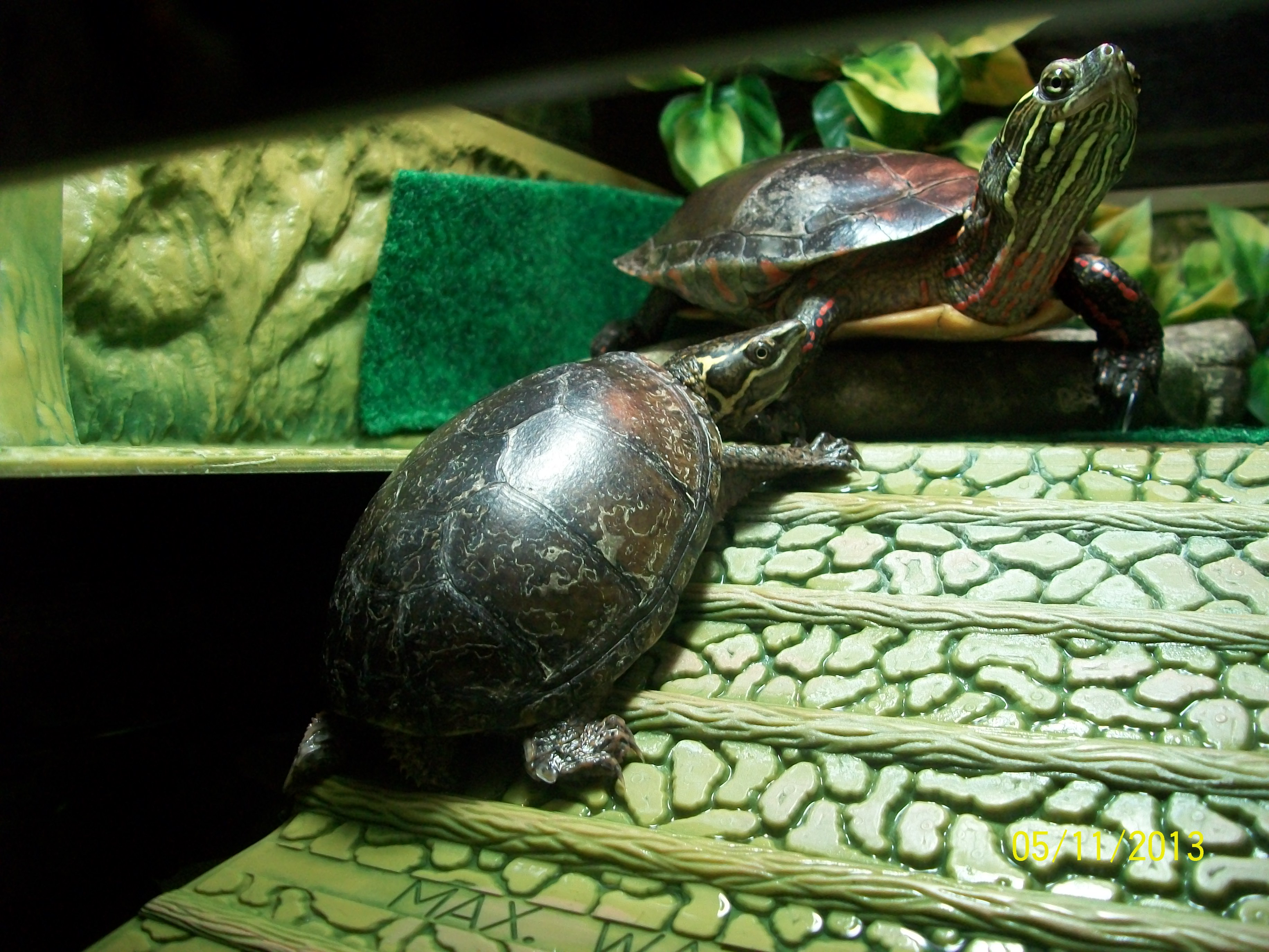 Top 28 Turtle Names 28 Best Names For Turtles Clinica