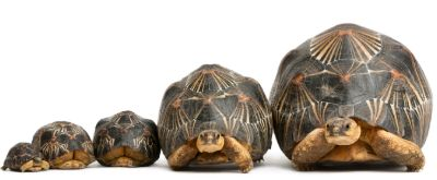5 radiated tortoises all of different size and ages