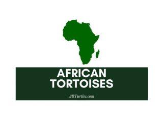 African Tortoises