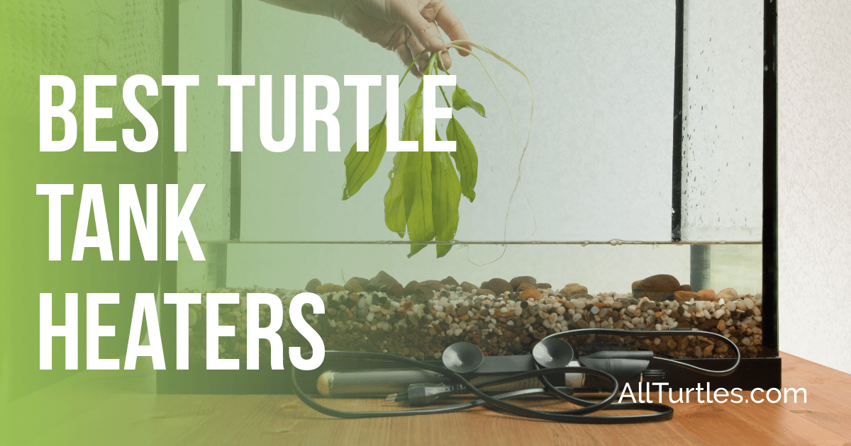 Best Turtle Heater For Aquariums