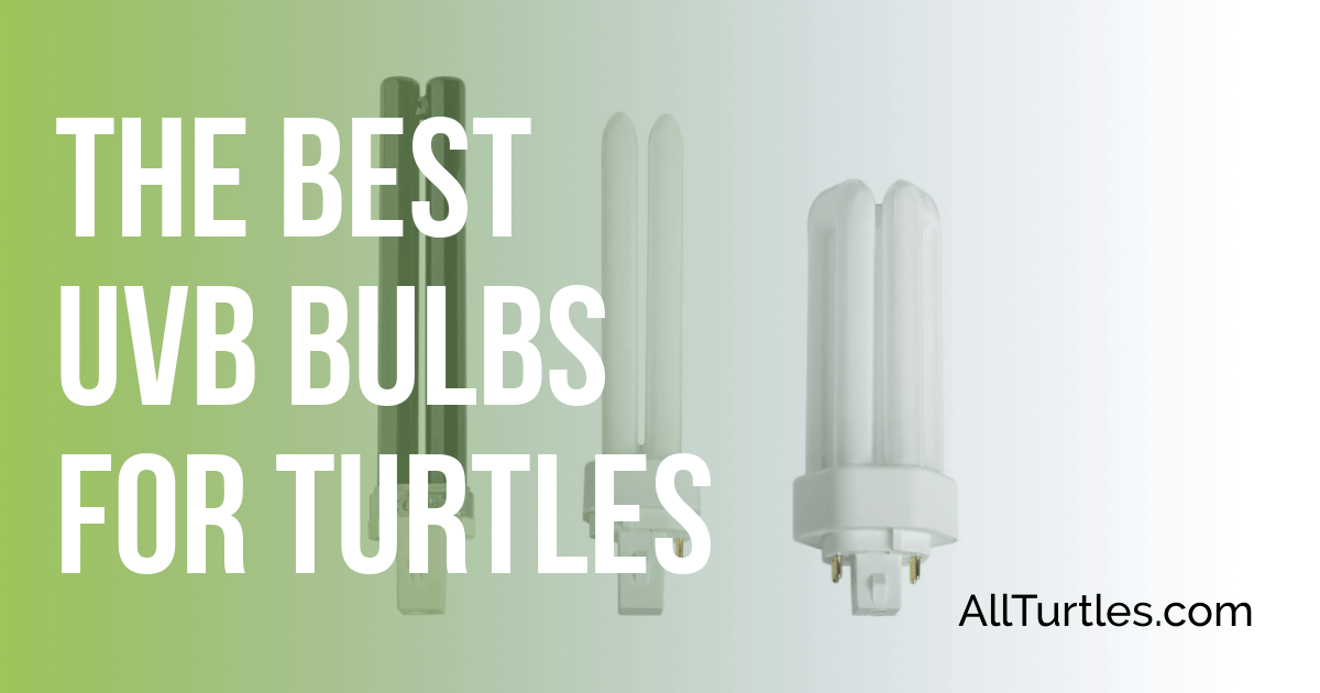 Best UVB Bulbs for Turtles