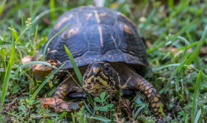 Box turtle safe plants