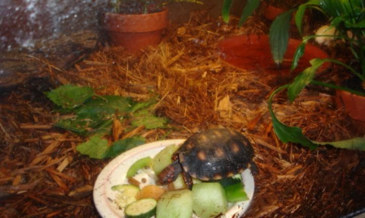 DIY Tortoise Table