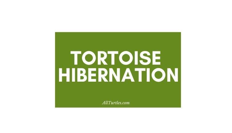 Do tortoises hibernate