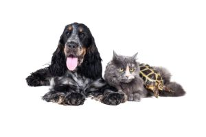 Dog cat and egyptian tortoise