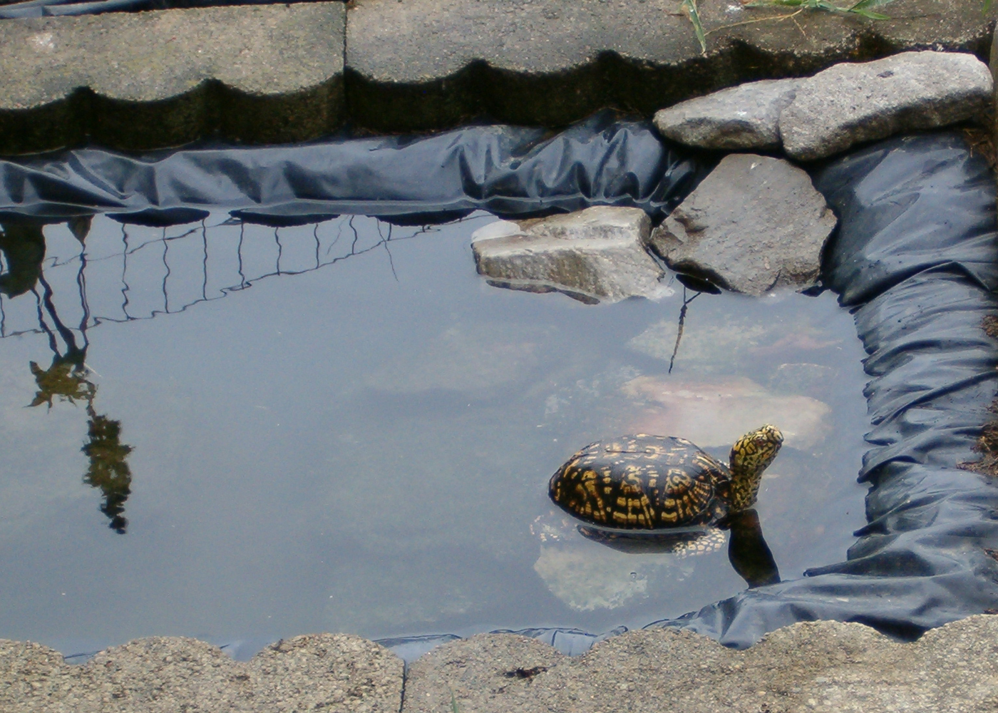 Turtle Setups All Turtles