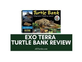 Exo Terra Turtle Bank Review