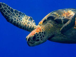 Fast turtles