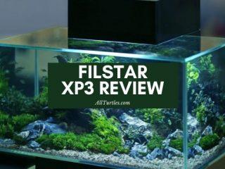 Filstar Rena XP3 Review