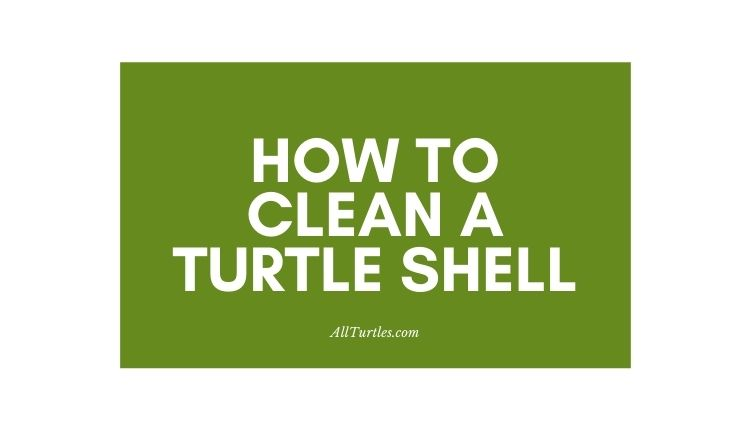 How To Clean A Turtle Shell