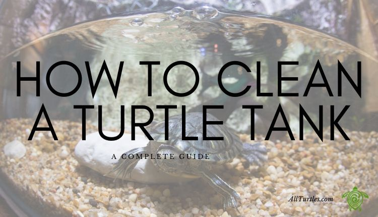 How to clean a turtle tank