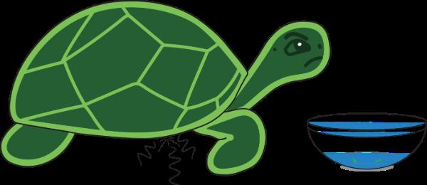 fasting turtle