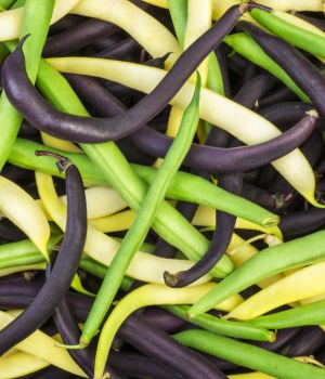 Mix of Green, yellow, and black Wax beans