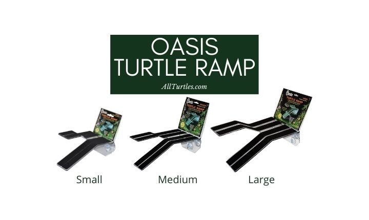 Oasis Turtle Ramp Review