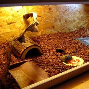 Redfooted-Tortoise-Habitat
