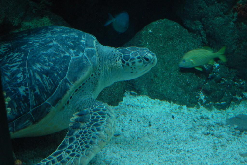 Turtle FAQs - All Turtles