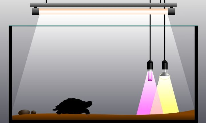 Semi aquatic turtle tank setup