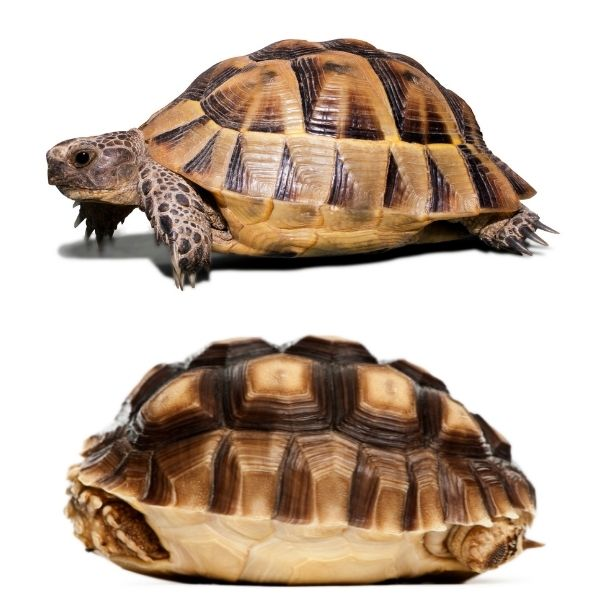 Shell color differences