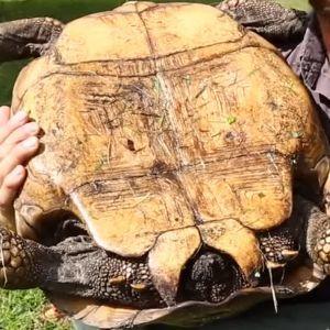 Female Tortoise shell