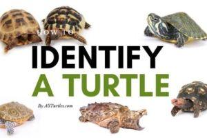 Turtle-Identification