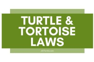 Turtle-Laws