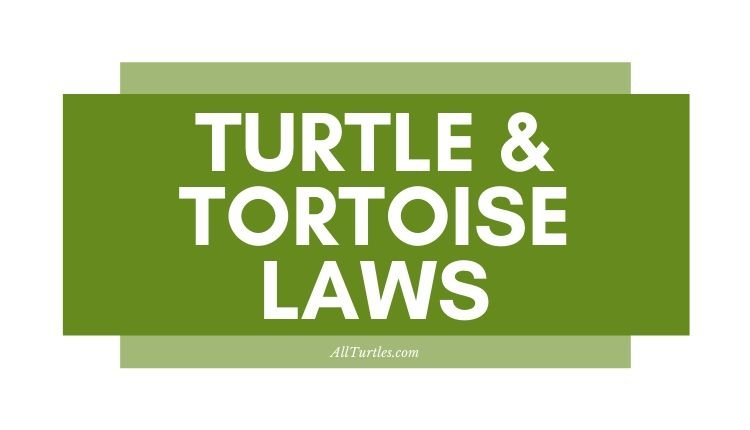 Turtle Laws