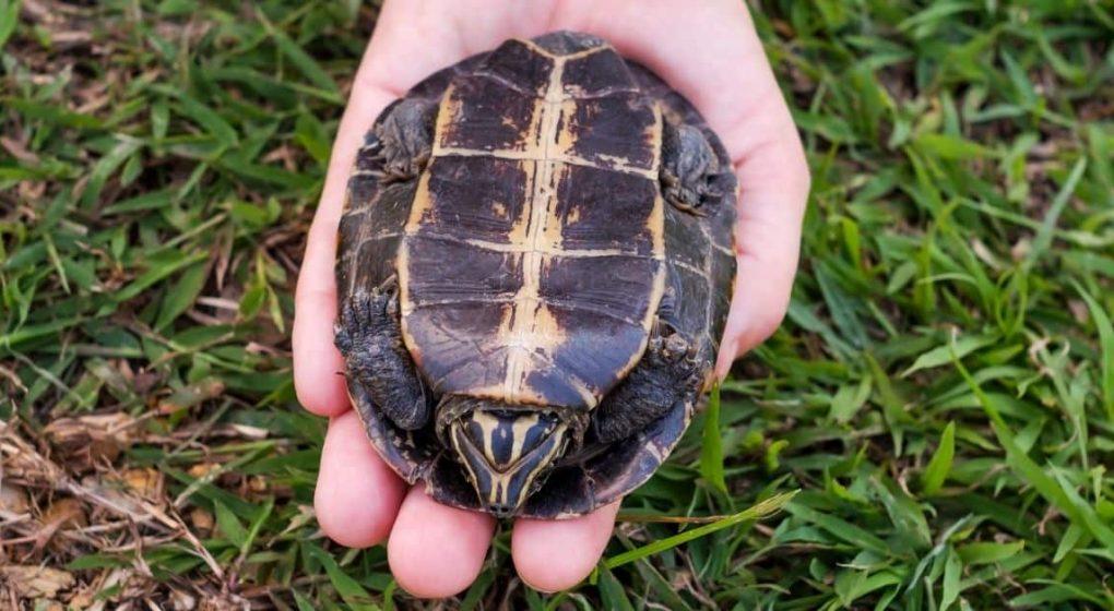 Turtle Newbie