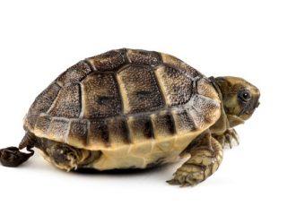 Turtle Poop