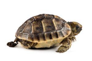 Turtle Poop from newborn tortoise