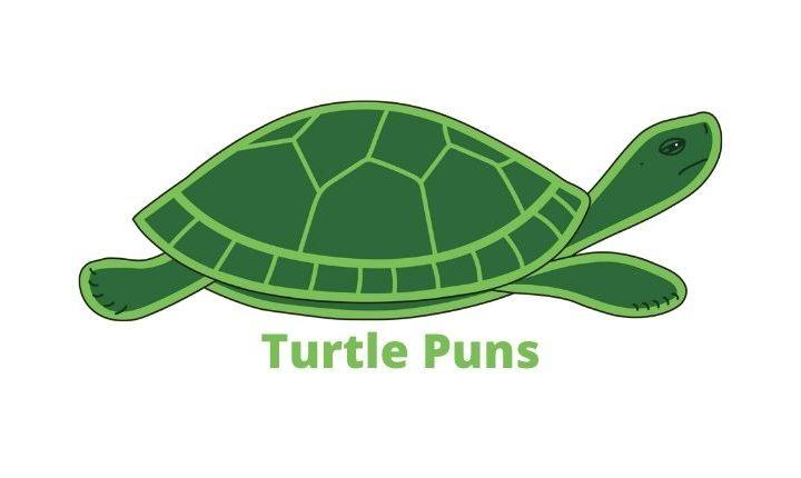 Turtle Puns