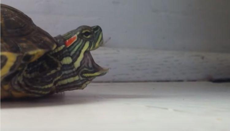 Turtle Sneezing