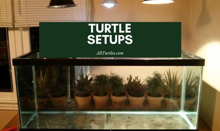 Turtle setups
