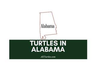 Turtles in Alabama