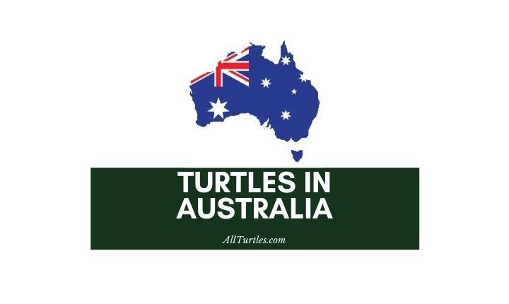 Turtles in Australia