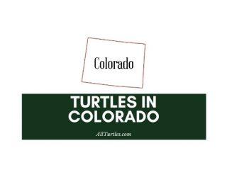 Turtles in Colorado