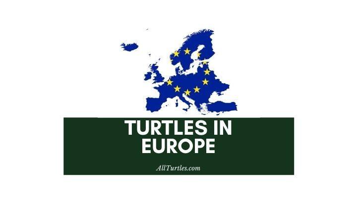 Turtles in Europe