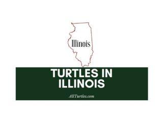 Turtles in Illinois
