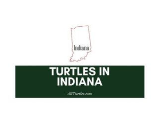 Turtles in Indiana