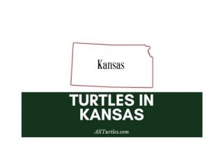 Turtles in Kansas