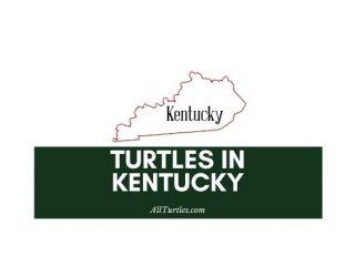 Turtles in Kentucky