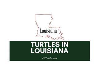 Turtles in Louisiana