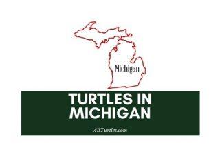 Turtles in Michigan