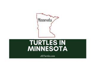 Turtles in Minnesota