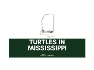 Turtles in Mississippi