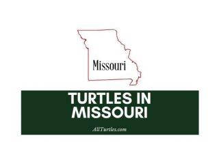 Turtles in Missouri